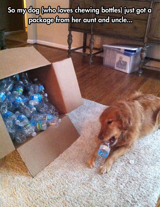 Best gift any dog can ever ask for…