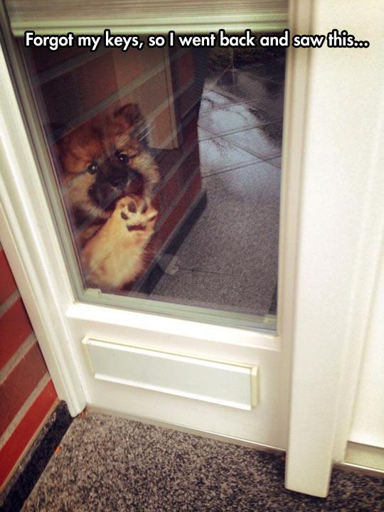 cute-dog-window-waiting-paw