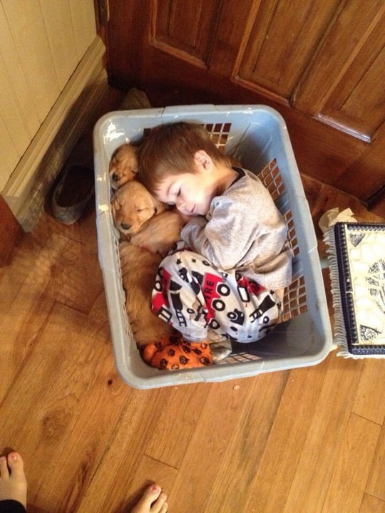 cute-funny-kid-puppies-basket-pajamas