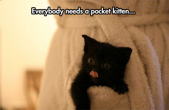 The new and improved pocket kitty…