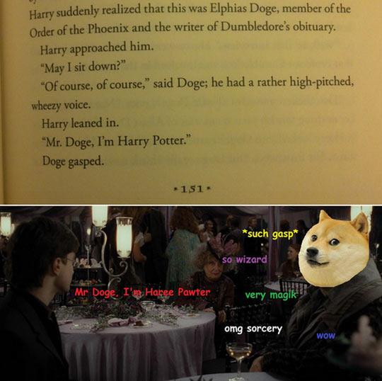 Mr. Doge, I'm Harry Potter…