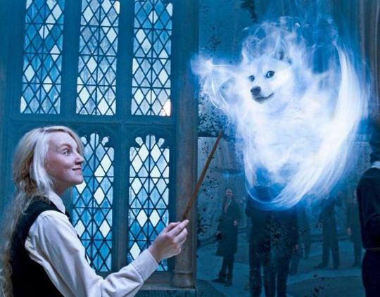 funny-Doge-Luna-Harry-Potter-spell