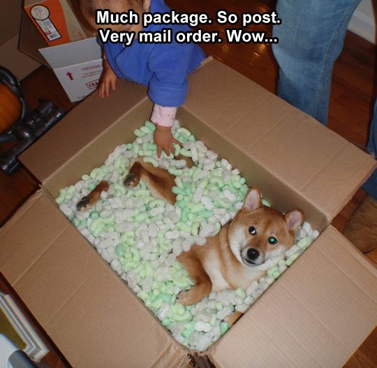 Our Doge came in the mail…