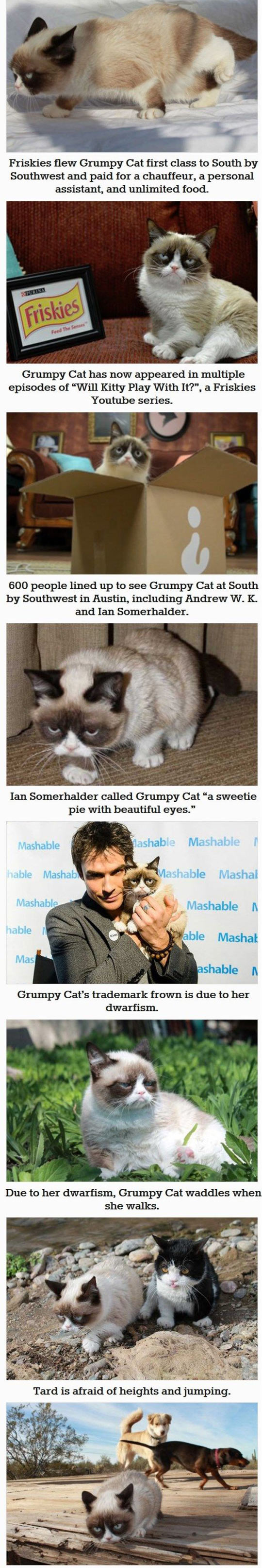 funny-Grumpy-cat-fact-you-dont-know-TV