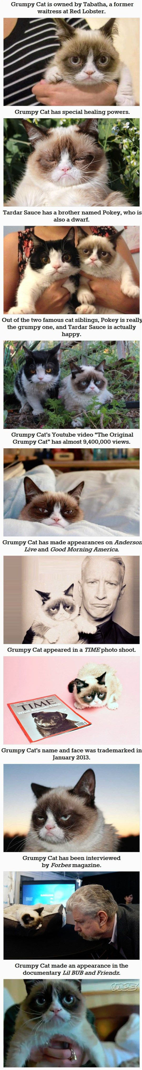 funny-Grumpy-cat-fact-you-dont-know-Time