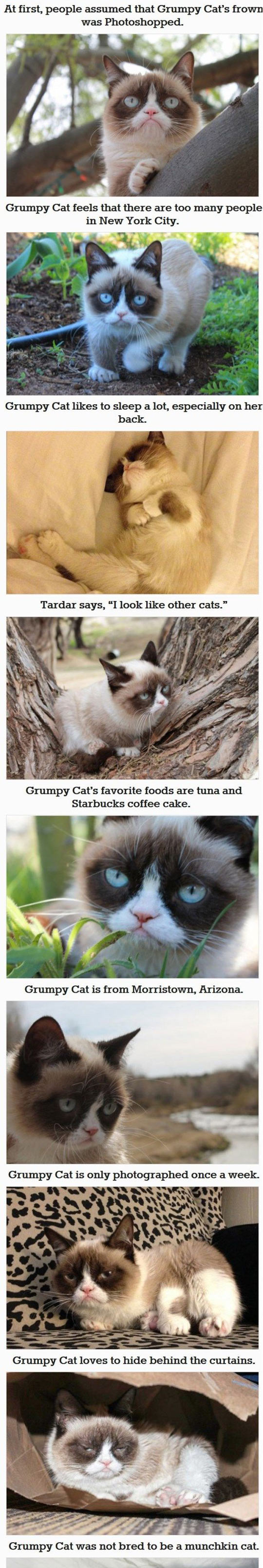 funny-Grumpy-cat-fact-you-dont-know-tree