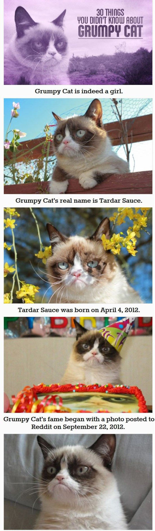 funny-Grumpy-cat-fact-you-dont-know