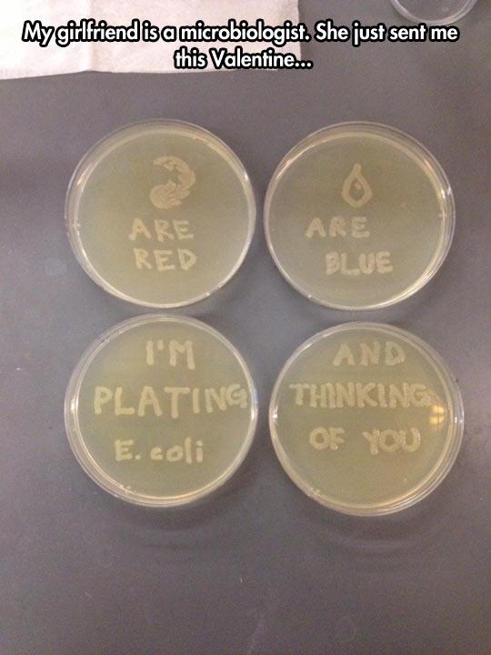 Microbiologist love…