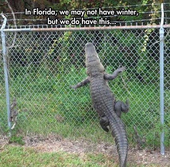 Florida: The Australia of America…
