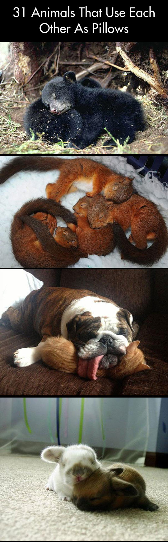 Pictures of animals that use each other as pillows...