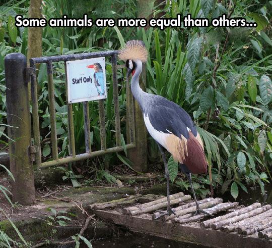 funny-animals-staff-only-door-bird