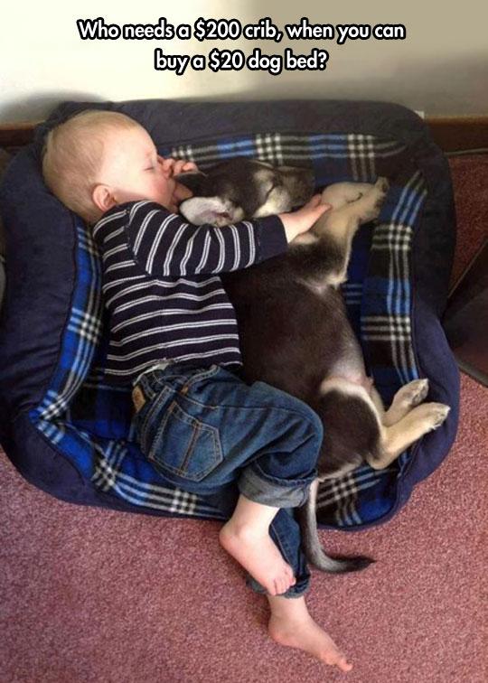 funny-baby-sleeping-dog-bed-floor