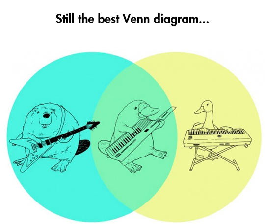 funny-band-music-animals-duck-guitar