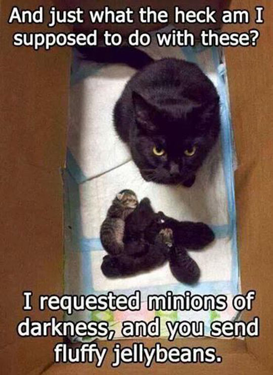 Minions of darkness…