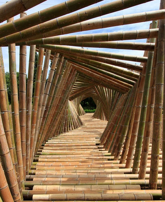Tunnel of canes…