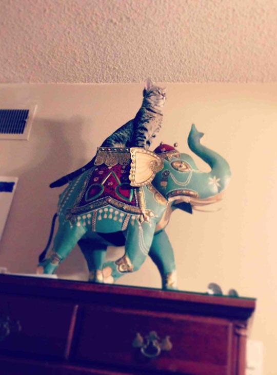 funny-car-elephant-Indian-decoration
