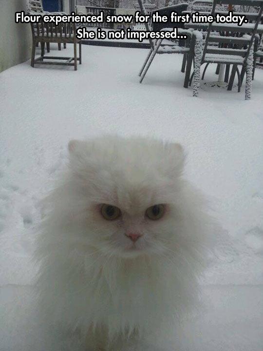 Snow cat is not impressed…
