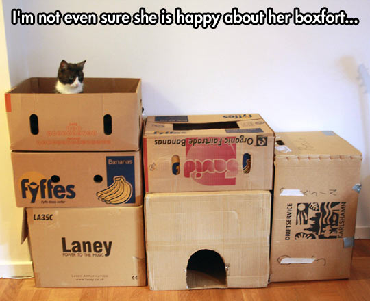 A cat and his castle…
