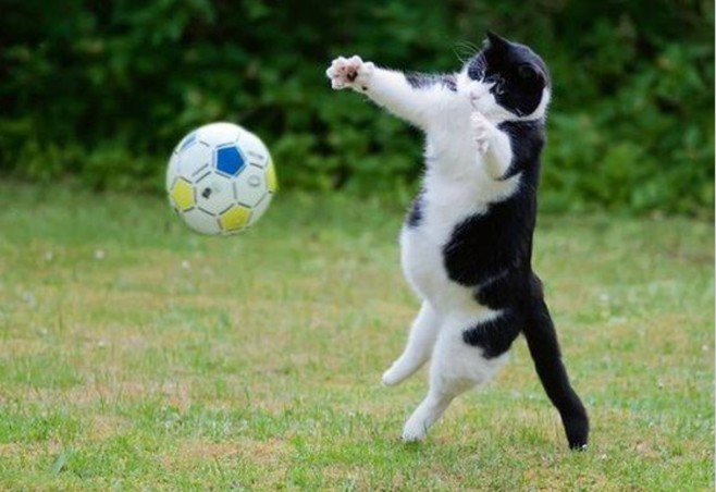 Cats are the best goalkeepers…