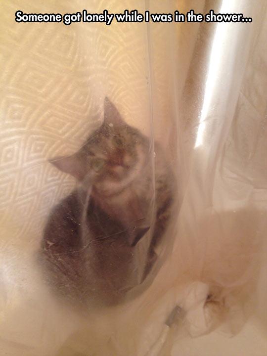 Psycho cat edition…