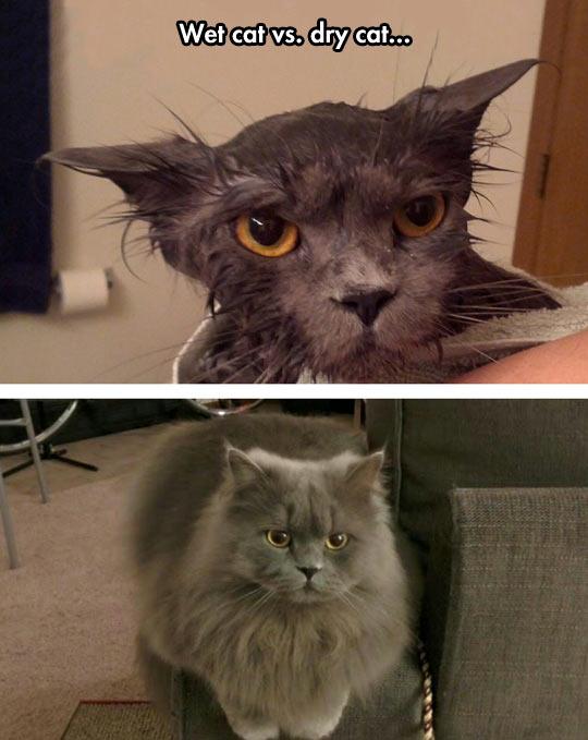 funny-cat-bath-wet-fluffy