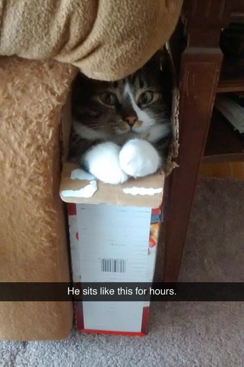 Boxed cat…