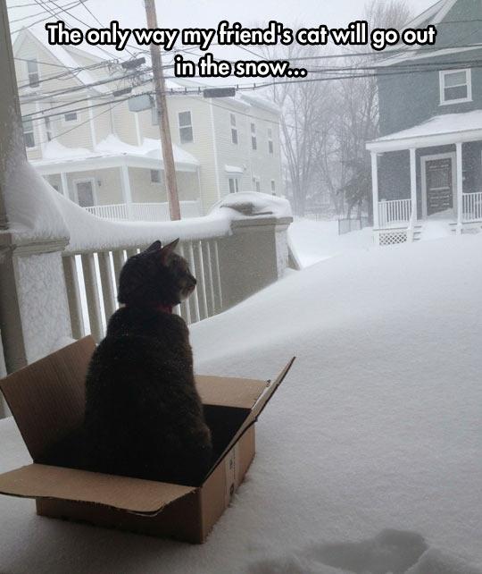 funny-cat-box-sled-snow