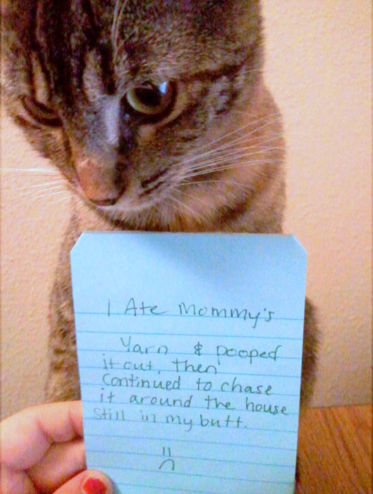 funny-cat-confession-note-ate