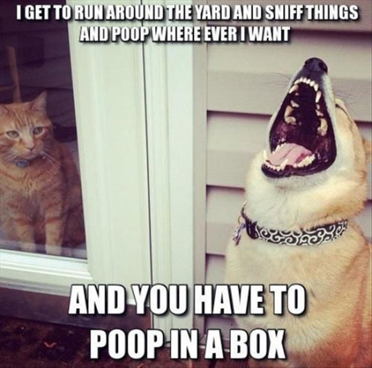 The perks of being a dog…