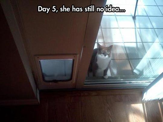 funny-cat-door-glass-waiting-sad-face