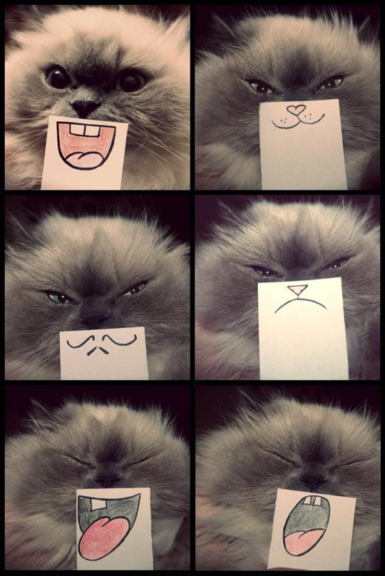 Cat emotions…