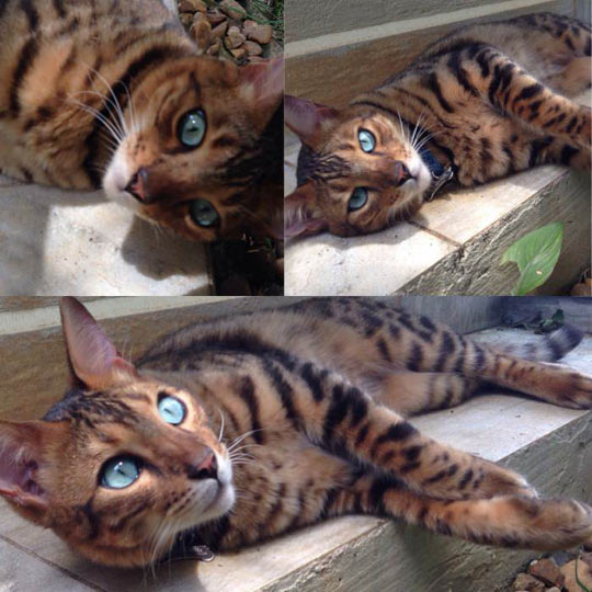 funny-cat-eyes-stripes-cyan