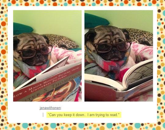 funny-cat-kitten-book-reading