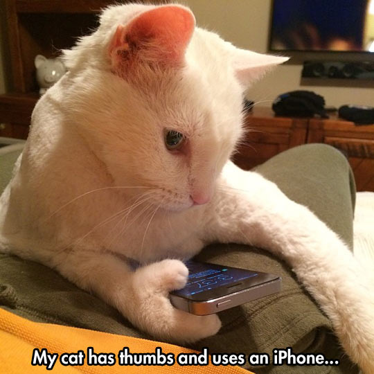 funny-cat-phone-towel-thumbs