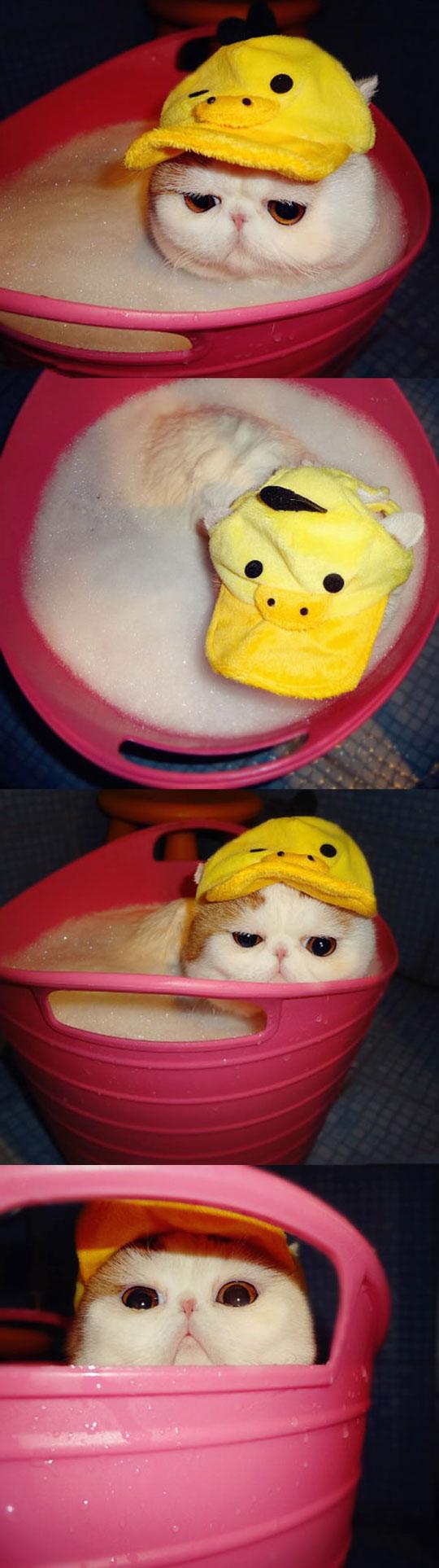 I've got my bath hat on…