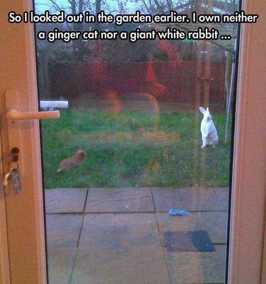 funny-cat-rabbit-back-yard