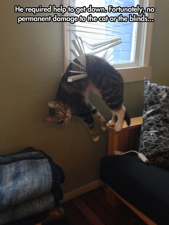 funny-cat-stranded-blinds-ridiculous-help