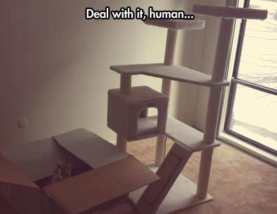funny-cat-tree-house-climb-cardboard-box