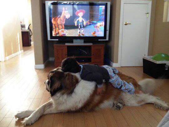 funny-child-dog-Tv-living-room