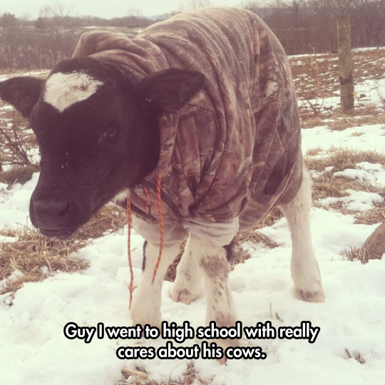 funny-cow-clothes-hoodie-winter-snow