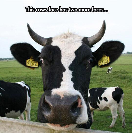 funny-cow-fur-profile-couple-kiss