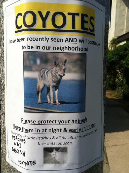 funny-coyote-sign-neighborhood-warning-joke