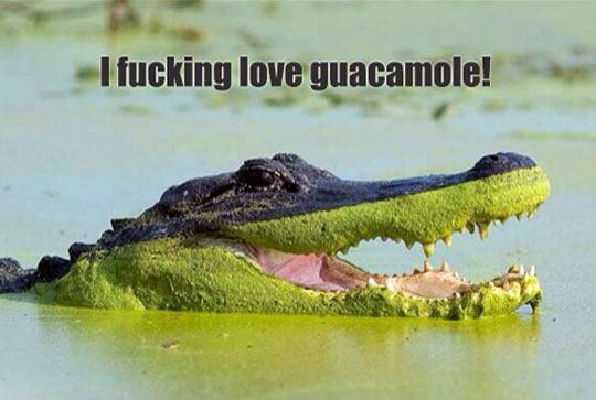 funny-crocodile-guacamole-swamp-water-aligator