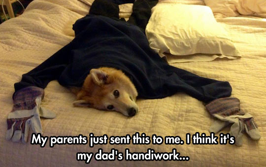funny-dog-bed-clothes-gloves