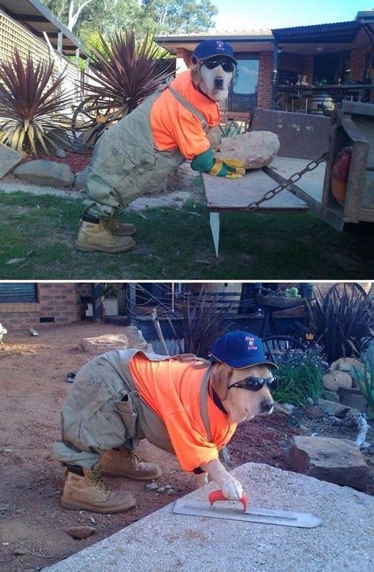 funny-dog-brick-bricklayer-work