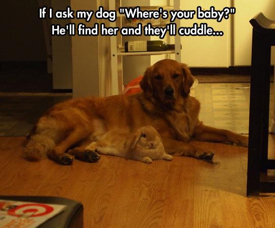 funny-dog-bunny-baby-cuddle