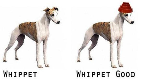funny-dog-hat-thin-whippet