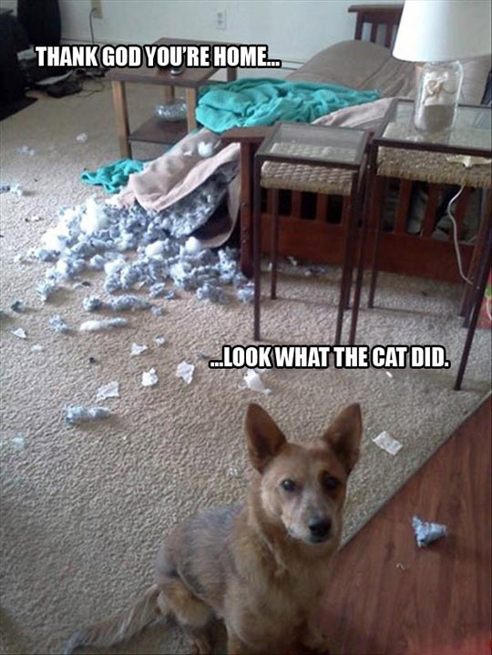 It was the cat…