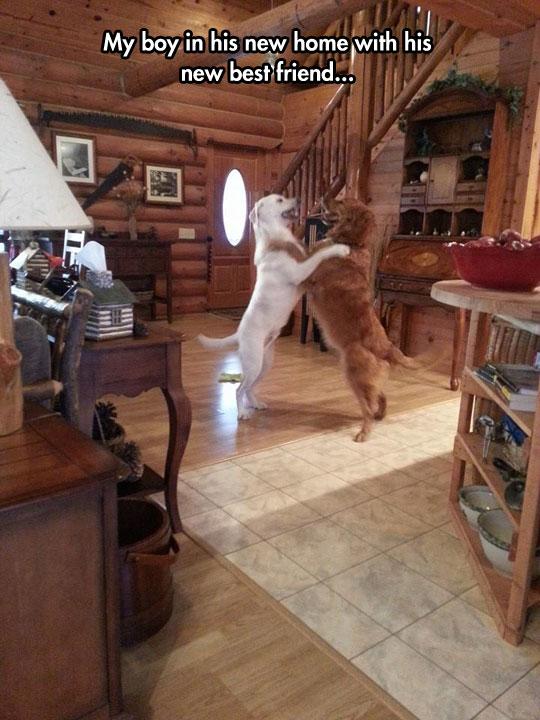 funny-dog-hug-happy-friends