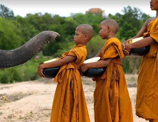 Elephant salute…